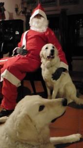Foto für Weihnachtsgruß