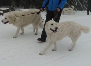 Amina im Schnee 2