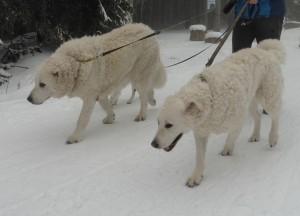 Amina im Schnee 3