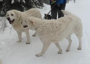 Amina im Schnee 4