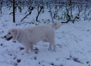 Schnee 01.15. 5