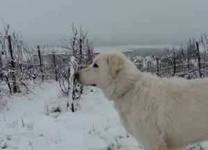 Schnee 01.15. 9