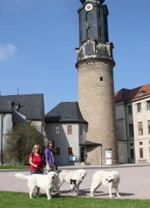 Weimar 20