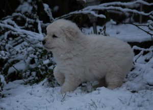 B Wurf der 1. Schnee 10