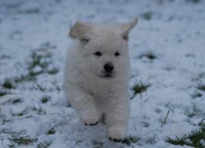 B Wurf der 1. Schnee 14