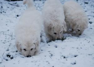 B Wurf der 1. Schnee 2