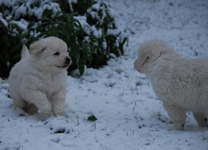 B Wurf der 1. Schnee 21