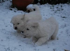 B Wurf der 1. Schnee 22