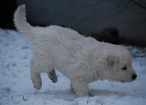 B Wurf der 1. Schnee 25
