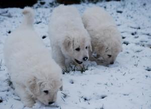 B Wurf der 1. Schnee 3