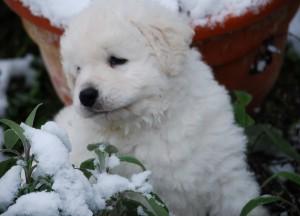 B Wurf der 1. Schnee 37