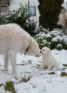 B Wurf der 1. Schnee 48