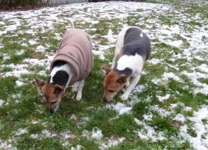 Schnee Russels 3